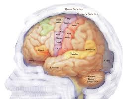 neuroscience brain